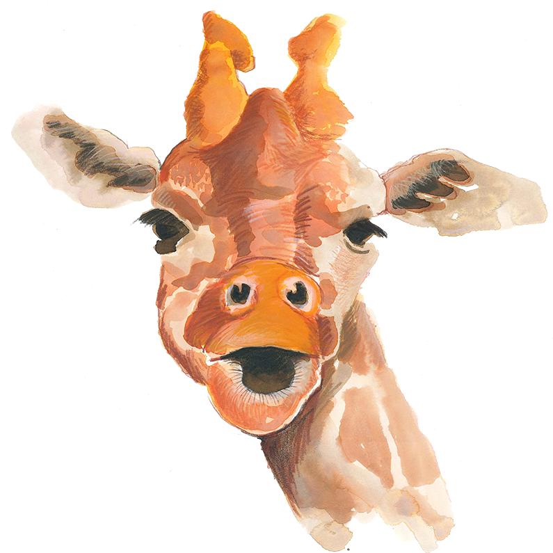 dyr_giraf_795x795px